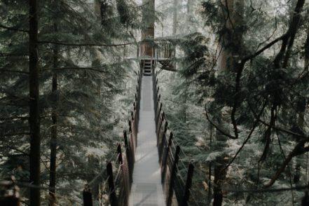 best canopy walkways Luxa Terra