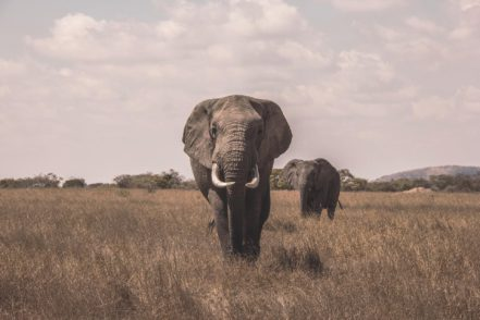 Explore The Heart Of Wilderness: The Best African Safari Parks