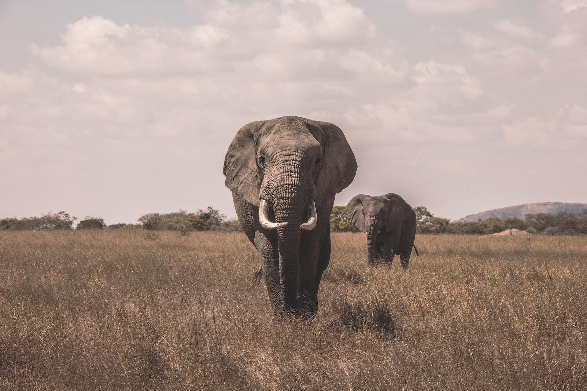 best african safari Luxa Terra