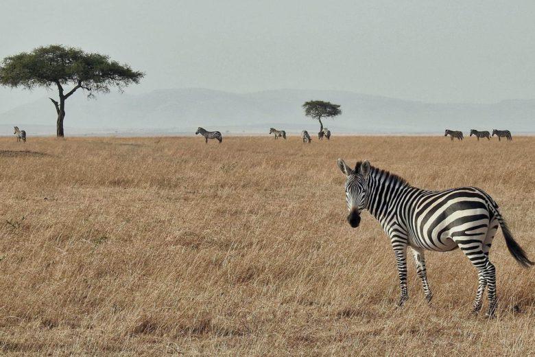 best african safari Masai Mara Luxa Terra