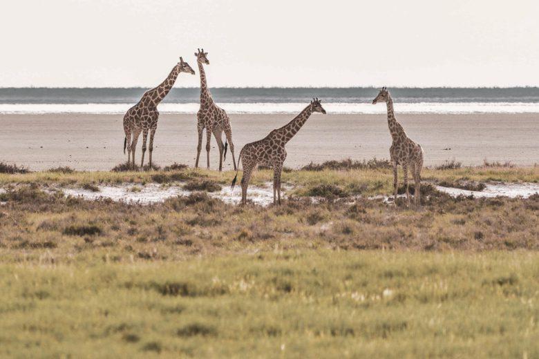 best african safari Etosha Luxa Terra