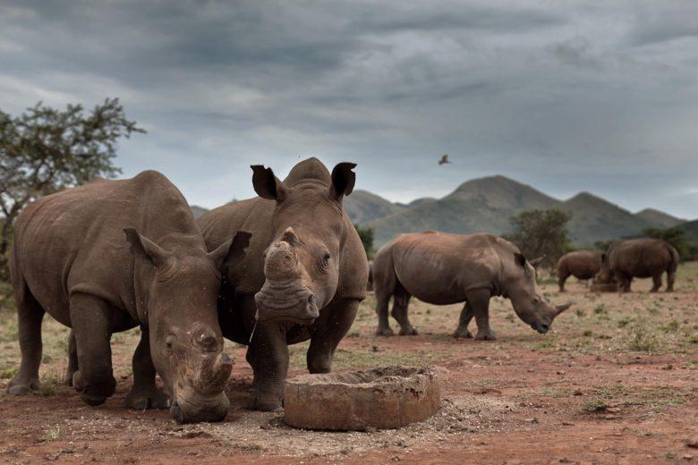 best african safari Kruger National Park Luxa Terra