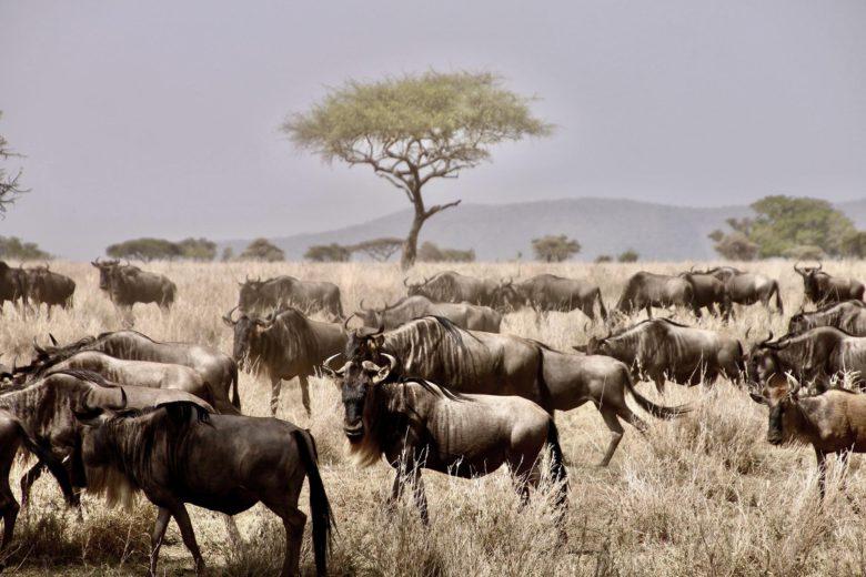 best african safari Serengeti National Park Luxa Terra