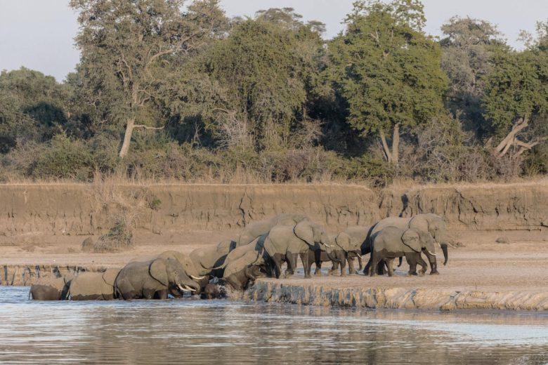 best african safari Luangwa Luxa Terra