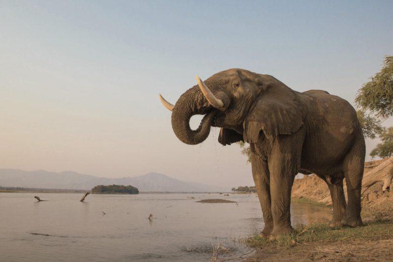 best african safari Mana Pools National Park Luxa Terra