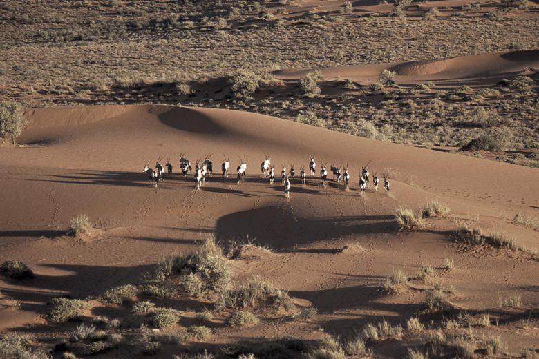 best african safari Kalahari Desert Luxa Terra